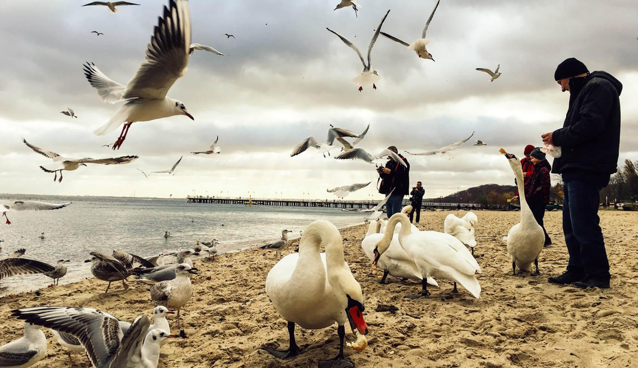 baltic sea birds beach photography photographers funny seagull fall winter poland people adventure